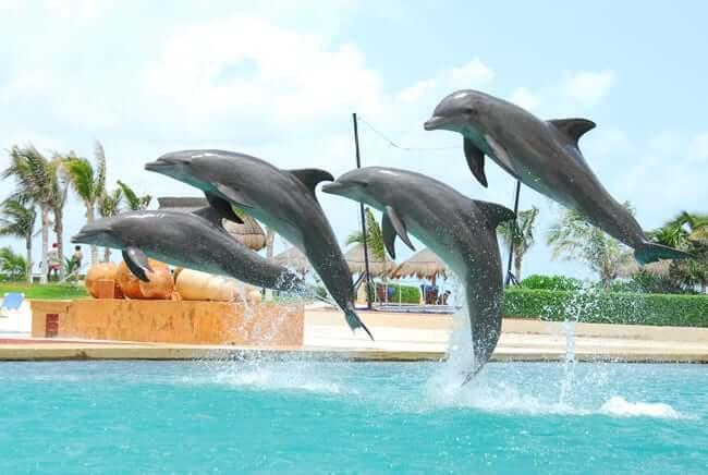 Delfines en Cancún
