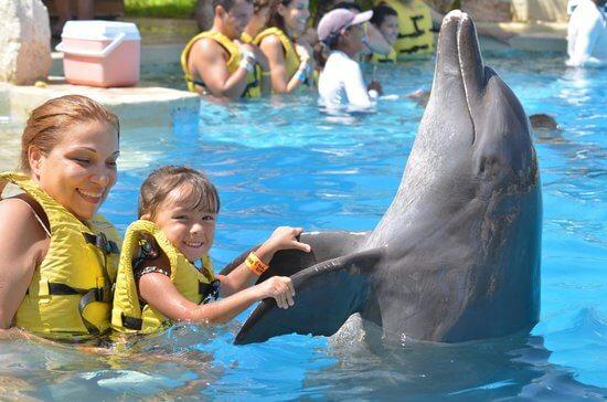 Família juega con un delfin en Cancún