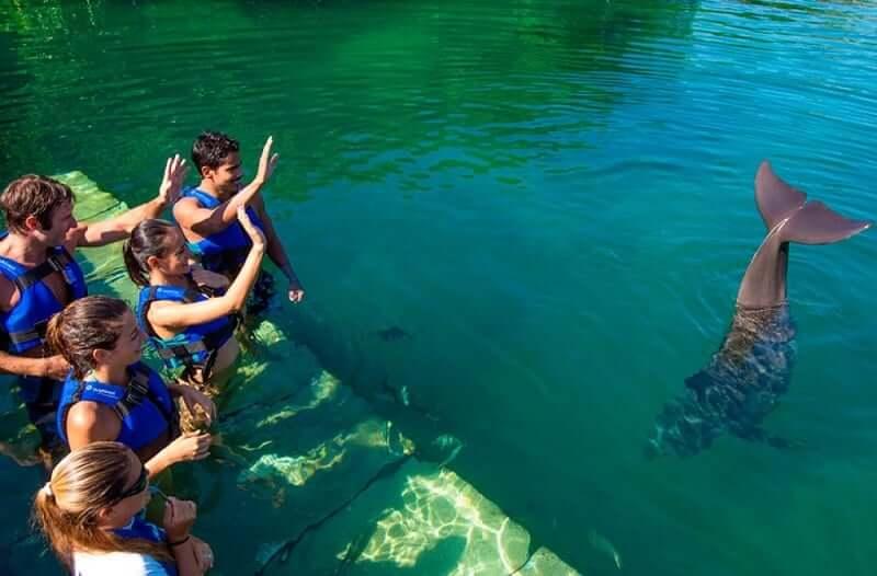 Nadar con los delfines en Delphinus Cancún