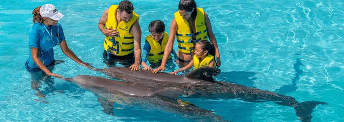Paquetes para Delphinus Cancún
