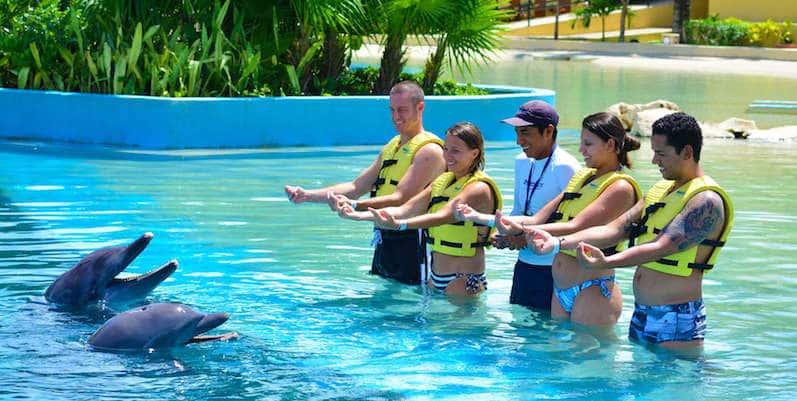 Actividad de nado con los delfines en Cancún
