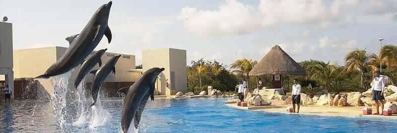 Diversión con Dolphinaris Cancún