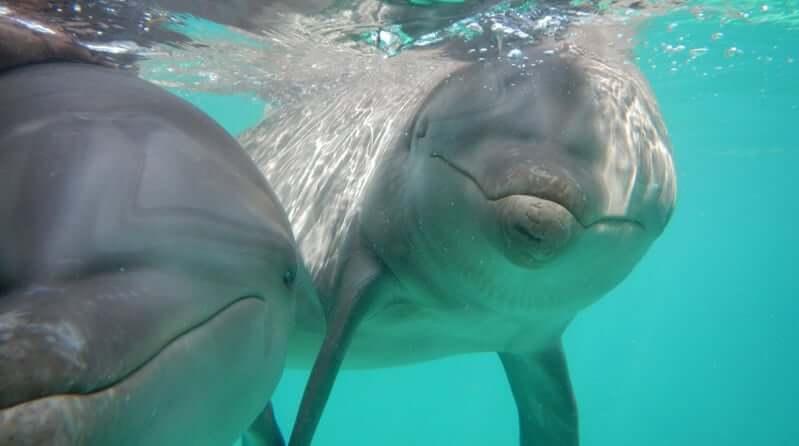 Atracción nado con delfines en el Parque Garrafón Park en Cancún
