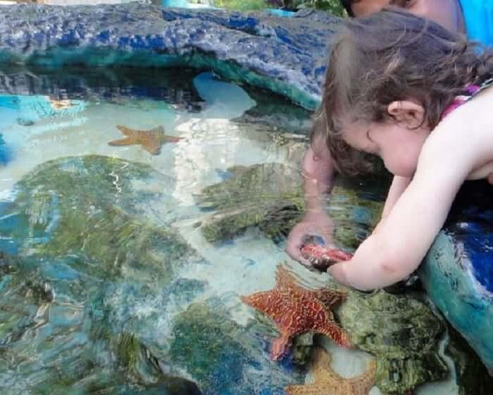 Diversión en el Interactive Aquarium Cancún
