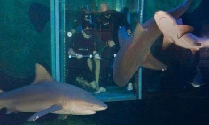 Nado con tiburones en el Interactive Aquarium Cancún
