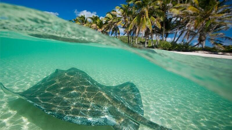 Isla Contoy en Cancún