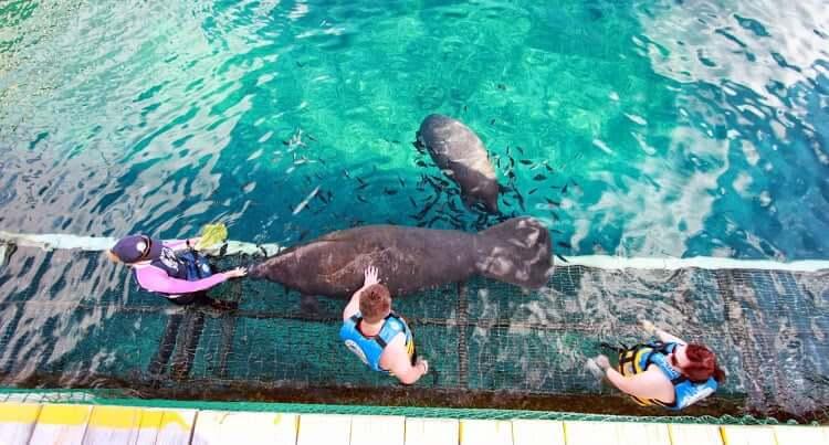 Atracción nado con los leones marinos en el Parque Chankanaab Beach Adventure Park en Cancún