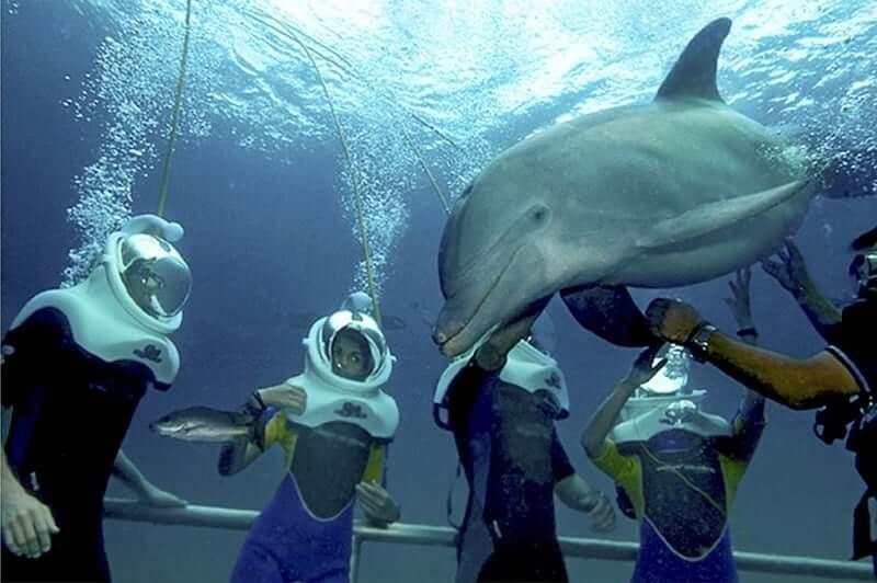 Atracciones en el Parque Xel-Há en Cancún - Nado con delfines