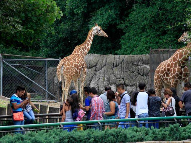 Zoológico de Chapultepec en Ciudad de México